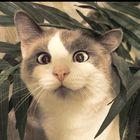 CAT_CAKE Pinterest Account
