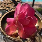 Monalisa Nayak Pinterest Account