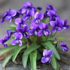 Violet Green Pinterest Account