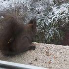 Hedgehog Little's Pinterest Account Avatar