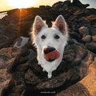 dogs phere instagram Account