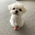 chloe rayne instagram Account