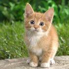 Cat world Pinterest Account