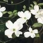 White Leaf Designs Pinterest Account