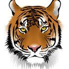About Wild Animals Pinterest Account