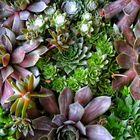 Jennifer Lubman/Muhly & Cedar Botanicals Pinterest Account