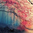 Rumeysa Pinterest Account
