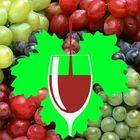 vinhosempreconceito Pinterest Account