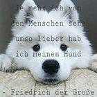 Tiere Welt Pinterest Account