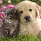 süße Katzen Pinterest Account