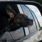 Road Trip With Our Dog | Pet-Friendly Travel Blog Pinterest Account