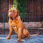 Dog-kingdom Pinterest Account