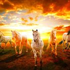 Em Horse Pinterest Account