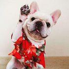 Bestdogteach instagram Account