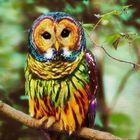 Rainbow owl