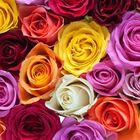 flowers Pinterest Account