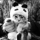 Tatjana Pinterest Account