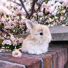 Doogssecanada Pinterest Account