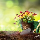 Gardening World Advice Pinterest Account