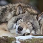 SleepingWolf Pinterest Account
