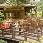 Backyard Japanese Garden | | Bonsai Trees | Koi Fish Pinterest Account