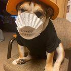 My Funny Dog 💛  ( I Follow Back) Pinterest Account