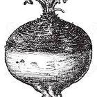 The Vintage Turnip Pinterest Account