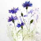 MyWaterColor's Pinterest Account Avatar