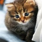 Miaou_Cats Juju Pinterest Account