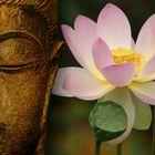 Buddhafee instagram Account