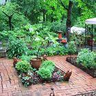 Medicinal Herb Garden's Pinterest Account Avatar