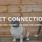 Pet Connection's Pinterest Account Avatar