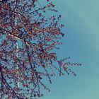 Syd.🥀🥺 Pinterest Account
