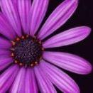 sunshine treasures & scents Pinterest Account