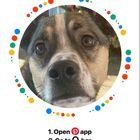 Animal Lover's Pinterest Account Avatar