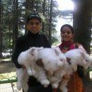 Niveditha Dinesh Rao Pinterest Account