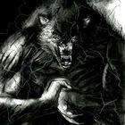 Wolf Night Pinterest Account
