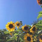 laken flowers Pinterest Account