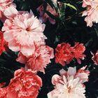Madison Bear instagram Account