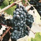 Good Wine Pinterest Account