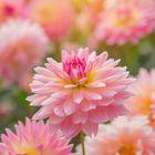 pinkangel2000 Pinterest Account