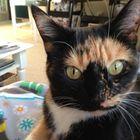 Rubecca Vemula Pinterest Account