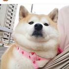 bvbecreature Pinterest Account