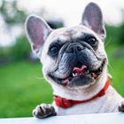 Pet Care Garage🐶 instagram Account