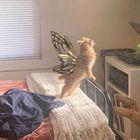 Caitlin Sher's Pinterest Account Avatar