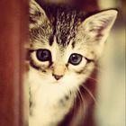 jade Pinterest Profile Picture
