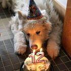 Dog Lover World Pinterest Account
