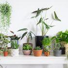 House Plant Pinterest Account