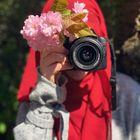 Jessi deluxe Pinterest Account