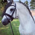 Purplebubbles instagram Account